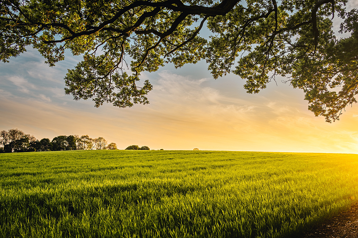 Buying a farm – a Valuer's perspective